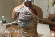 Mô hình nửa cơ thể người 50cm