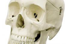 Mô hình sọ người