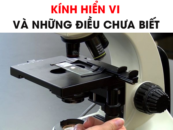 kinh-hien-vi-va-nhung-dieu-chua-biet